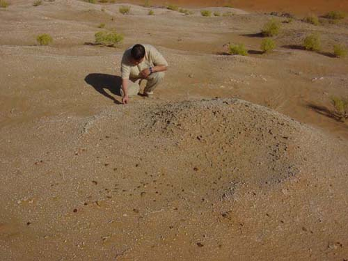 Dominique Pauli examines one of the lithic scatters at Kharimat Khor Al Manahil (Photograph by Dr Mark Beech)
